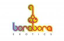Identidad corporativa Borabora exotics